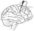 Brainie-Logo